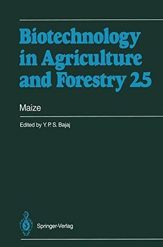 Maize (Biotechnology in Agriculture and Forestry) Pdf