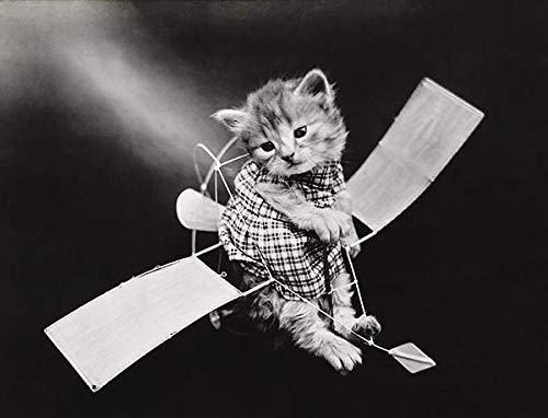The Aviator - Cat Kitten On Toy Glider Plane - 1914 - Photo ()