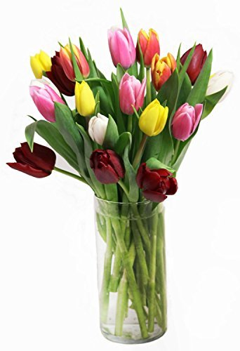 Fresh Cut Tulips Mix Colors 30 stems with Free Vase by eflowerwholesale