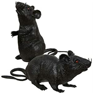 scary prank black rats