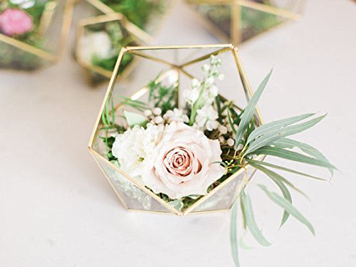 Bella's garden Geometric Terrarium Container Desktop Planter for Succulent Fern Moss Air Plants Holder Miniature Outdoor Fairy Garden Gift Wedding Ring Glass Box (Medium, Gold)]()