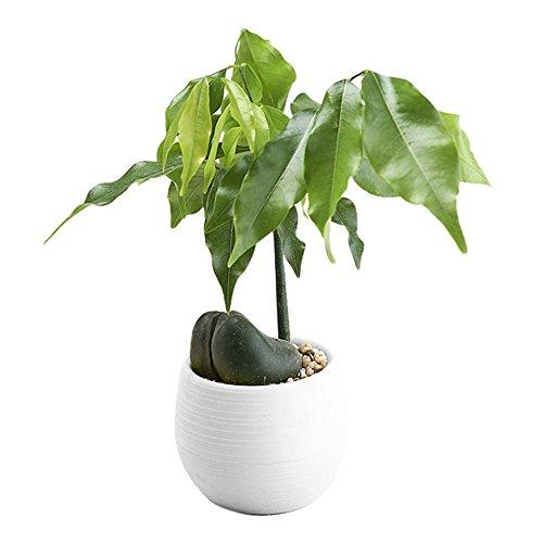 Hot Sale!DEESEE(TM)Mini Colourful Round Plastic Plant Flower Pots Home Office Decor Planter (White)