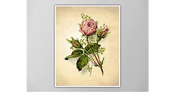 flower white rose blooms,High quality Canvas print choose your size Rose