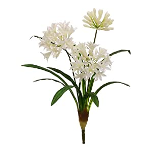 "21"" Agapanthus Bush Cream White (Pack of 12) 13"