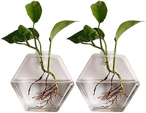 Macetas Colgantes 2 piezas de jardinería Jarrón colgar de la pared del acuario hidropónico florero de cristal transparente de cristal de botella en el suministro índice Decoraciones Cualquier Departam