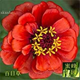 GEOPONICS 2: Promotion Time-Limited Summer Excluded Regular Mini Hundred Days Seeds of Hedysarum Bupleurum Ball On Leaves About 100 2