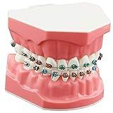 Dentalmall Dental Teeth Orthodontic Demonstration