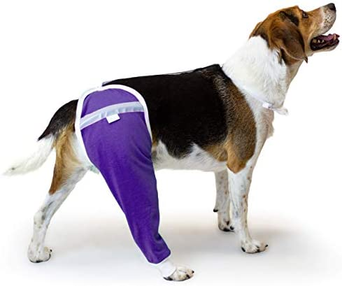 After Surgery Wear Hip and Thigh Wound Protective Sleeve for Dogs. Dog Recovery Sleeve. Recommended by way of Vets Worldwide