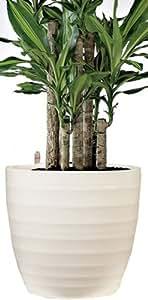 Scheurich 359649 - Gancho y colgador para contenedores de plantas, beige