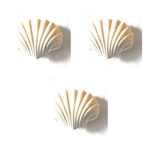 My Mermaid Hatching Shell, Magic Mega Grow Blind Bag Egg, Mermaid or Unicorn,600% Growth Sea Ocean Beach Marine Creatures Party Toys Bundle Value Pack (3 Pack - Shells)