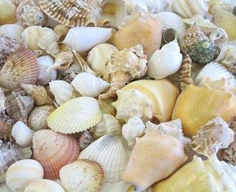 amazon com hinterland trading caribbean assorted seashell mix 3