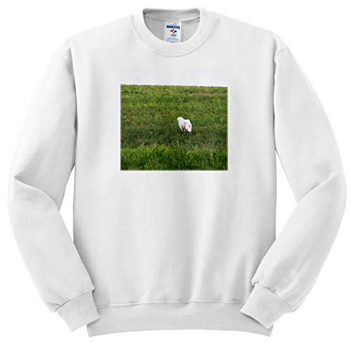 Jos Fauxtographee- Doggie Walking Away - A pet Dog Walking Out Alone in a Field Away from The Camera - Sweatshirts - Adult Sweatshirt Large (ss_294288_3)