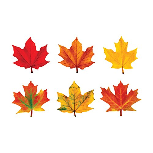 TREND enterprises, Inc. Maple Leaves Classic Accents Variety Pack, 36 ct -