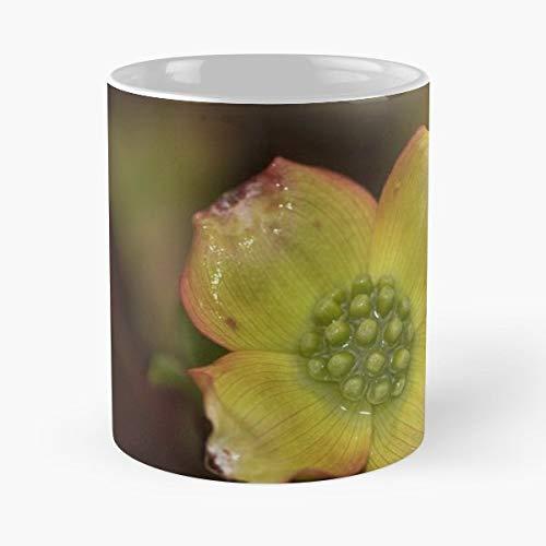Blossom Dogwood Tree Flower - White -coffee Mug- Unique Birthday Gift-the Best Gift For Holidays- 11 Oz.