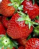 strawberry flavor extract