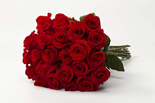 Martha Stewart Roses by BloomsyBox - Two Dozen Perfect Red Freedom Rose Selected by Martha and Hand-Tied, Long Vase Life