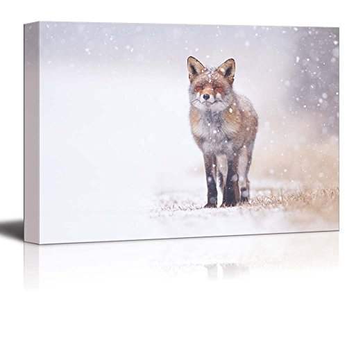 - Canvas Prints Wall Art - Red Fox in The Snow | Modern Wall Decor/Home Decoration Stretched Gallery Canvas Wrap Giclee Print & Ready to Hang - 16