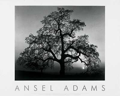Oak Tree Sunset by Ansel Adams - 24 x 30 inches - Fine Art P