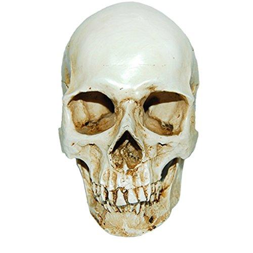 MagiDeal Lifesize Replica Anatomical Skeleton