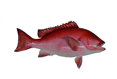 Home Comforts LAMINATED POSTER Red Snapper Fish Mount Animal