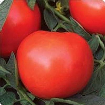 Tomato Garden Seeds - Phoenix Hybrid - 100 Seeds - Non-GMO, Vegetable Gardening Seed