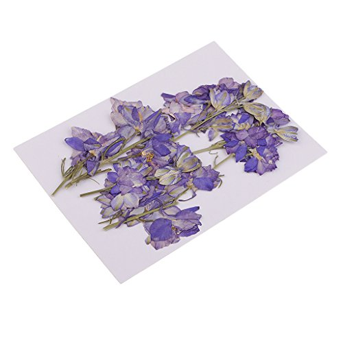 MagiDeal 15 Pieces Pressed Dried Larkspur Flowers with Stem Plants Herbarium For Jewelry Postcard Photo Frame For Resin Casting Making Phone Case Decoration