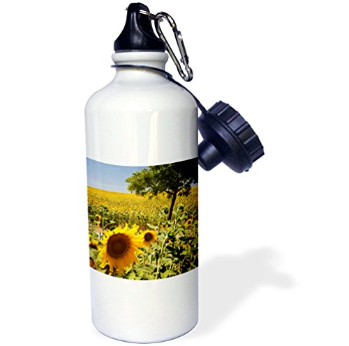 3dRose wb_205429_1 Spain, Andalusia, Cadiz Province. Tree in field of sunflowers. - Sports Water Bottle, 21oz by 3dRose