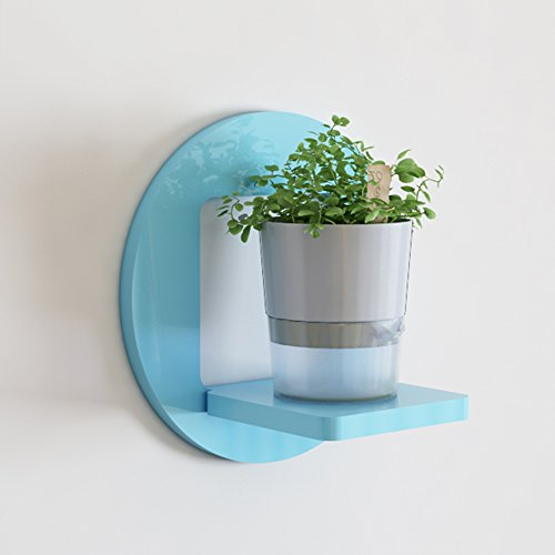 Shelf Wall, Living Room Wall Hanging Flower Rack, Decorative Rack, Balcony Wall, Plant Flower Pot Rack (Color : Blue, Size : 301630cm) by Shelf