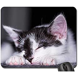 Mouse Pads - Baby Cat Cat Baby Kitten Young Cat Cat Snuggle 12
