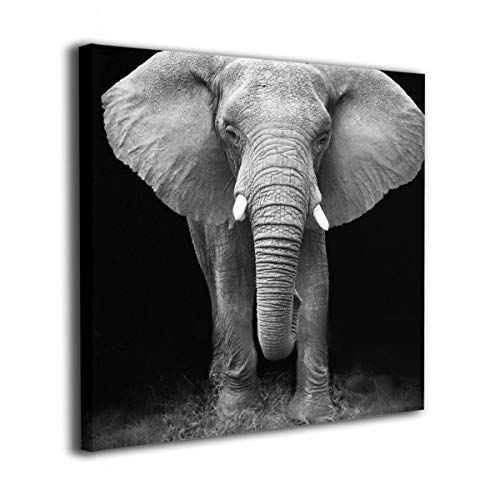 - Absonne Canvas Wall Art Black and White Glass Splashback Elephant Square Streched and Framed Paintings Picture for Home Decorations Wall Decor 16