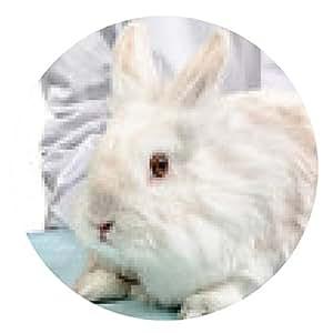 alfombrilla de ratón entrar en el tratamiento veterinario de conejos con jeringa - ronda - 20cm