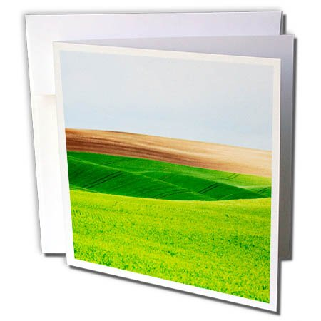 Palouse Hills - 3dRose Danita Delimont - Agriculture - Washington, Palouse, Green Hills of Wheat and Fallow fields - 6 Greeting Cards with envelopes (gc_279752_1)