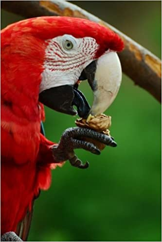 Scarlet Macaw Eating a Snack Journal: Take Notes, Write Down