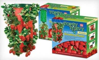 Topsy Turvy Strawberry Planter Turning The World Of Gardening