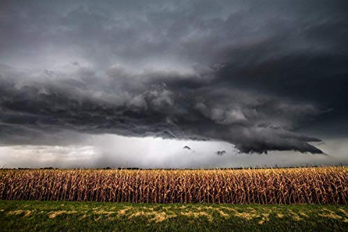 Corn Field Photography Art Print - Picture of Decayed Field and Intense Thunderstorm in Kansas Rural Country Decor 5x7 to 30x45
