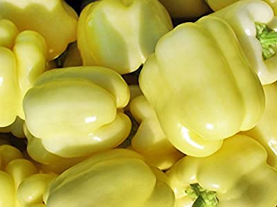 30+ ORGANICALLY GROWN Hungarian Soroksari White Bell Sweet Pepper Seeds, Heirloom NON-GMO, Super Prolific, Delicious, Thick Walled! From USA