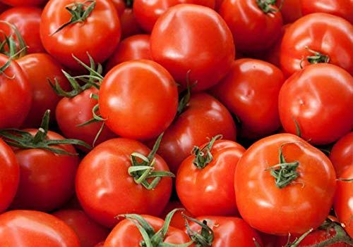 Girl Hybrid Tomato - Bush Early Girl Hybrid Tomato Seeds Bush Type Plant 18 inche Bulk 50 Seeds