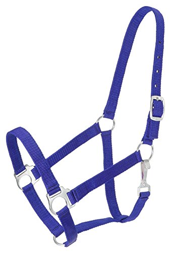 Tough 1 Economy Yearling Halter, Royal (Yearling Show Halter)