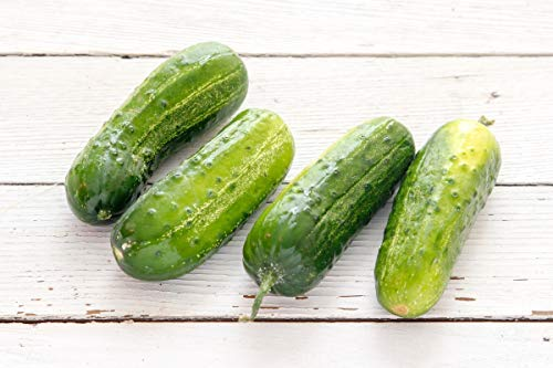 Boston Pickling Cucumber Seeds, 100+ Premium Heirloom Seeds, (Isla's Garden Seeds), Non Gmo, Survival Seeds, 90% Germination, Highest Quality (Best Pickling Cucumber Seeds)