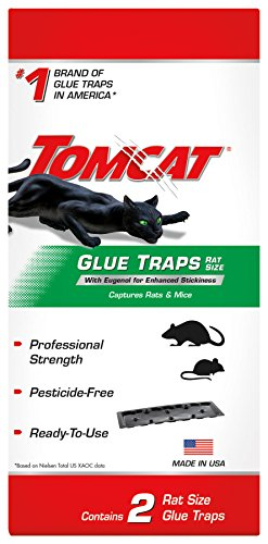 Tomcat Rat Glue Traps w/ Eugenol for Enhanced Stickiness (1 Pack of 2 Traps) | Captures Rats, Mice & Other Household Pests | Professional Strength, Pesticide-Free, Ready-To-Use