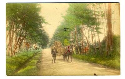 Horse Drawn Wagon Postcard Japan 1900's Hand Colored