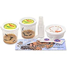 10 Live Caterpillars Shipped Now: Butterfly Kit Refills