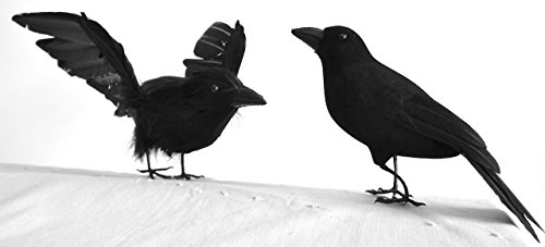 Raven Bird Halloween Costume (Halloween Crows, 7 & 8 inches long, Feathered, Raven birds, per SET of 2, by Lamplight Feather, Inc.)