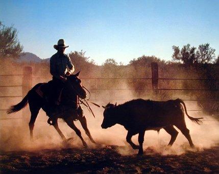Western Cowboy on Cutting Wild Horse Animal Bedroom Decor