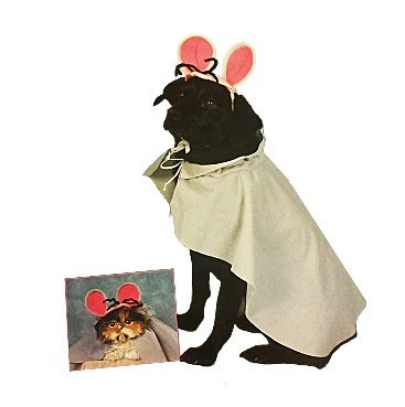 Mouse Pet Costume, Medium 14-16