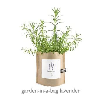 Amazon.com : Heirloom Lavender Garden-in-a-Bag : Garden & Outdoor