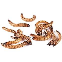 1000 Live Superworms High Protein Feeder