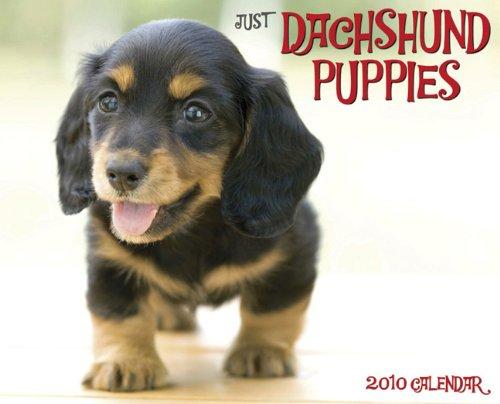 Just Dachshund Puppies 2010 Calendar