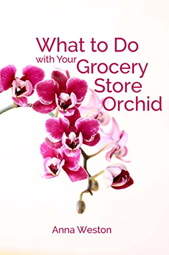 What to Do with Your Grocery Store Orchid: Caring for the Phalaenopsis Orchid