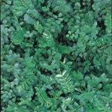 Nuts n' Cones Wildflower - Salad Burnet - 500 Seeds